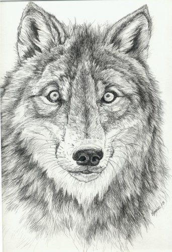 pen and ink wolf