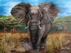elephant p copy