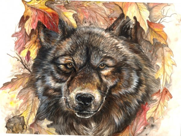 wolf in leaves