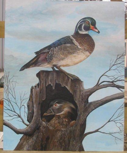 wood duck 00kk7